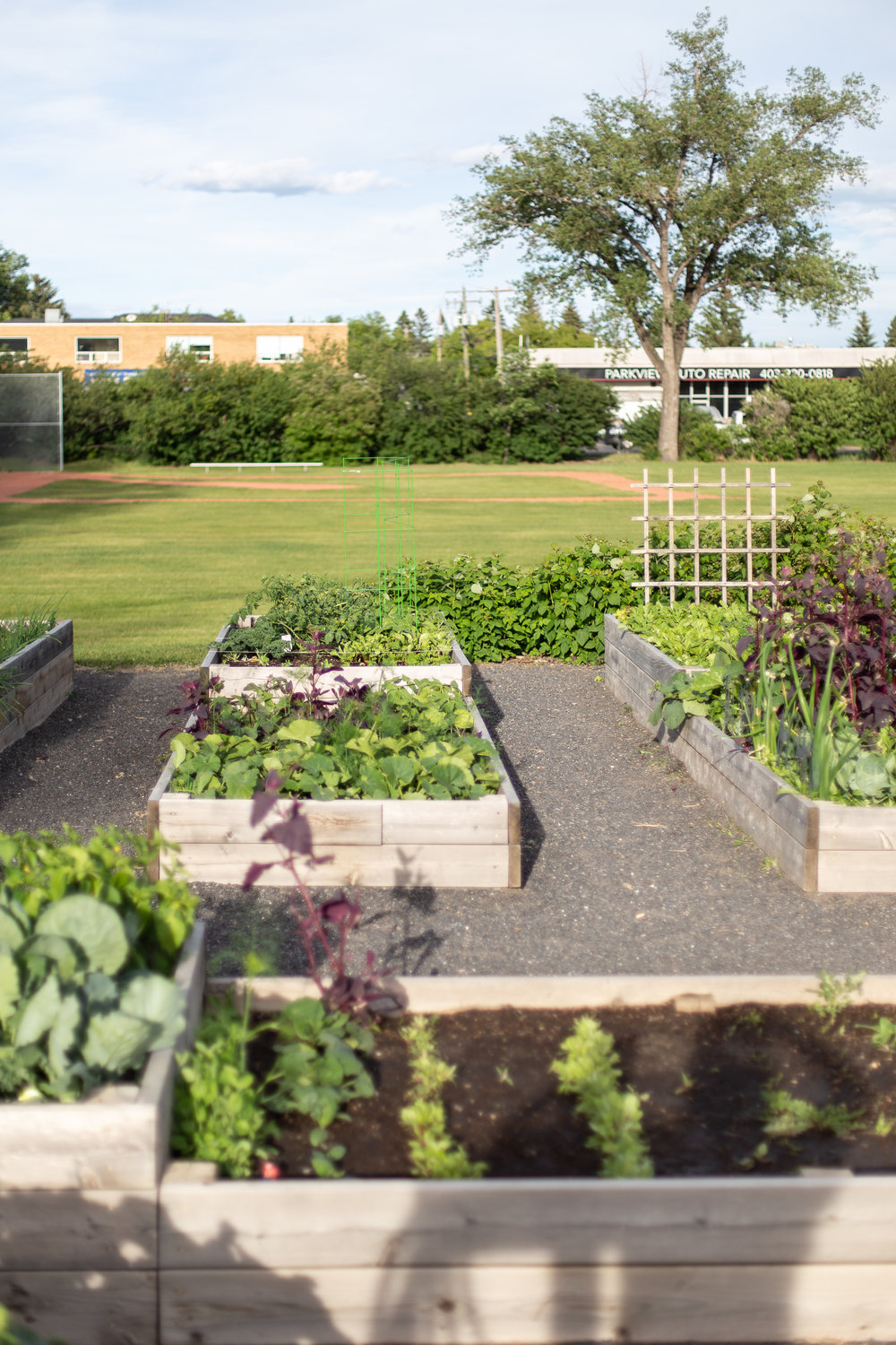 CommunityGarden-24.jpg