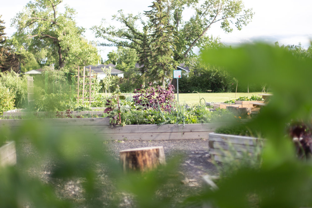 CommunityGarden-13.jpg