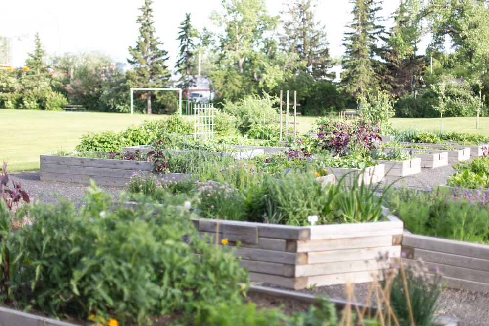 CommunityGarden-19.jpg