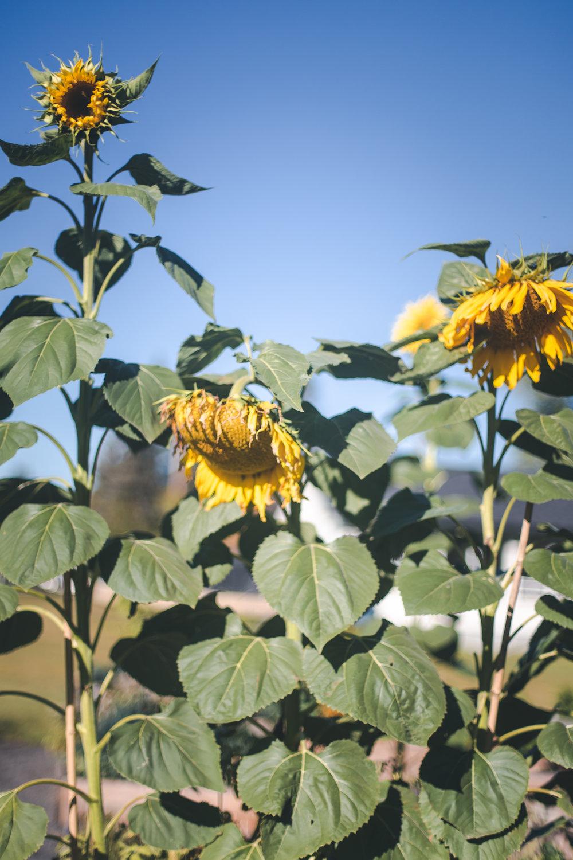 flowersandplants-7.jpg