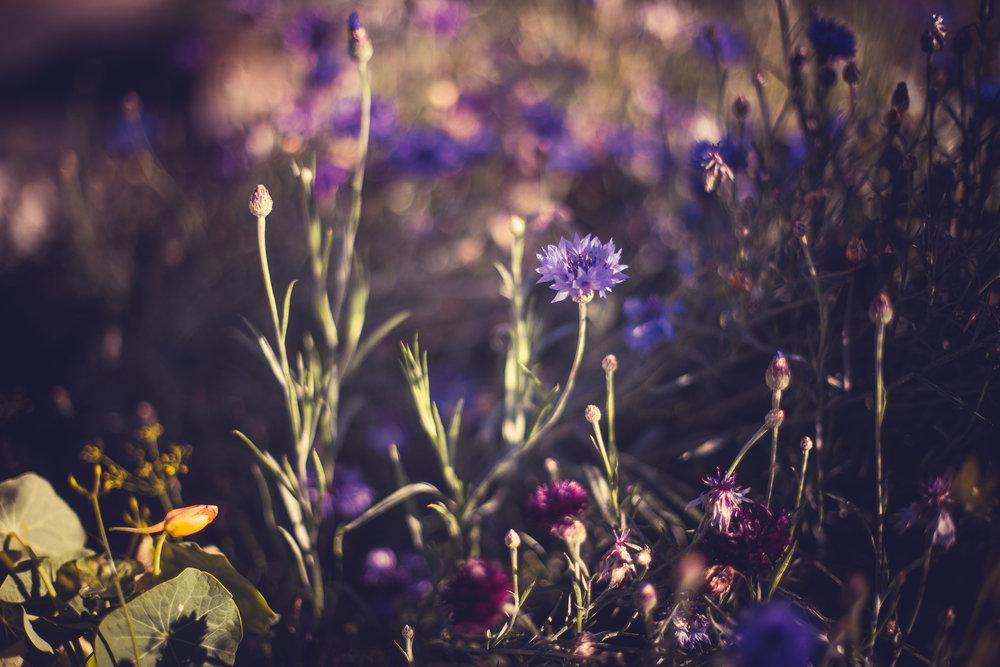 flowersandplants-5 copy.jpg