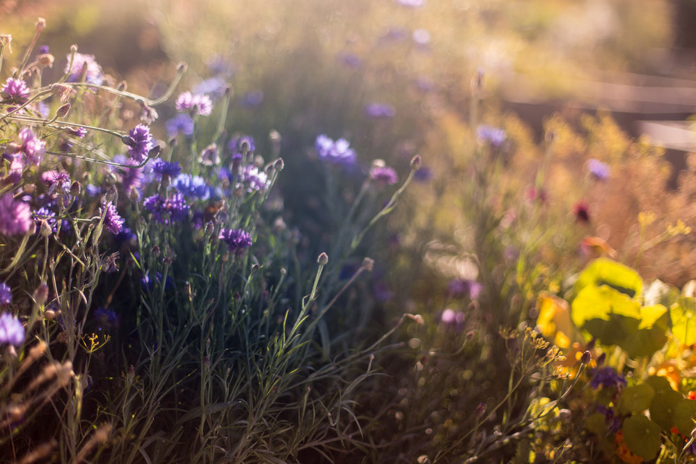 flowersandplants-10.jpg