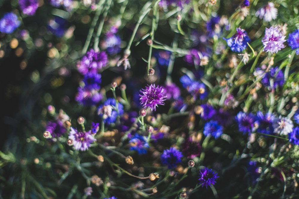 flowersandplants-13.jpg