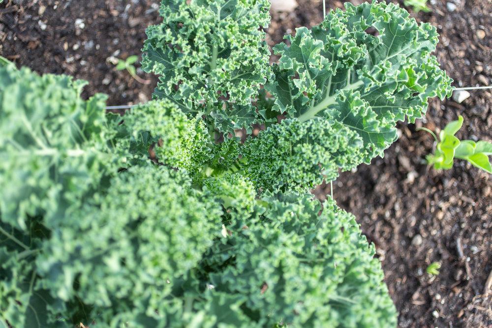 PlantsandFlowers-45.jpg