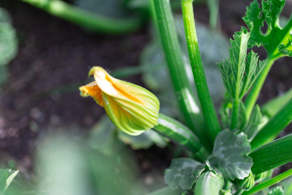 PlantsandFlowers-50.jpg