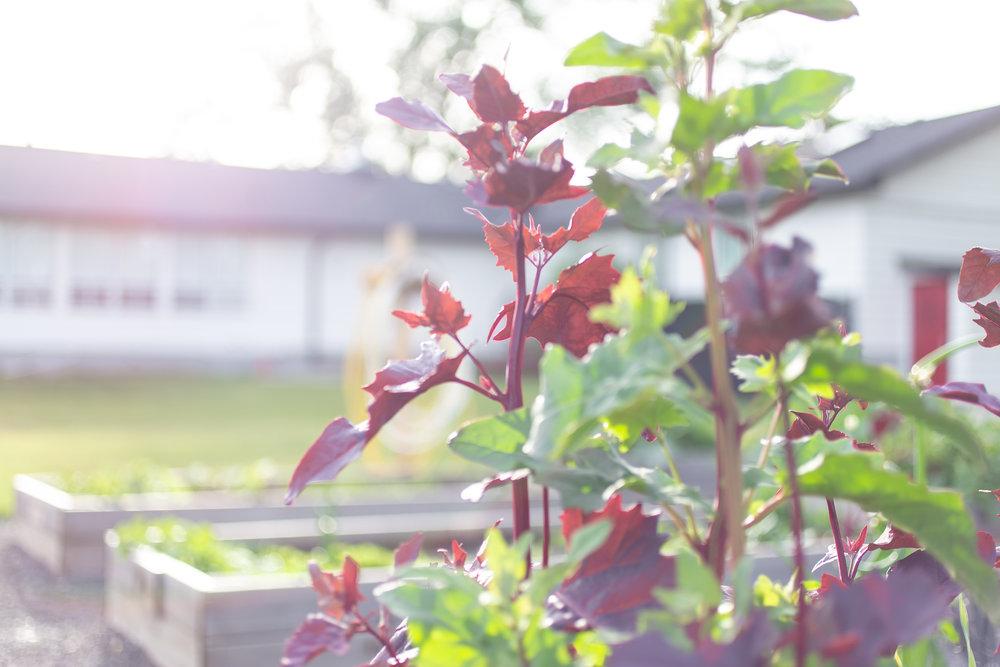 PlantsandFlowers-49.jpg
