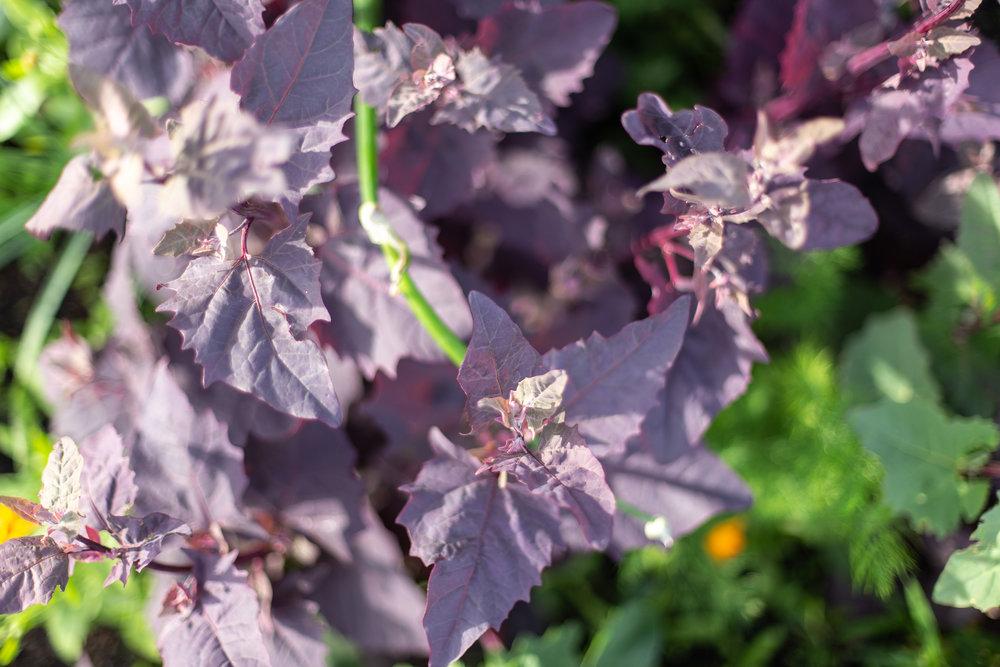 PlantsandFlowers-65.jpg