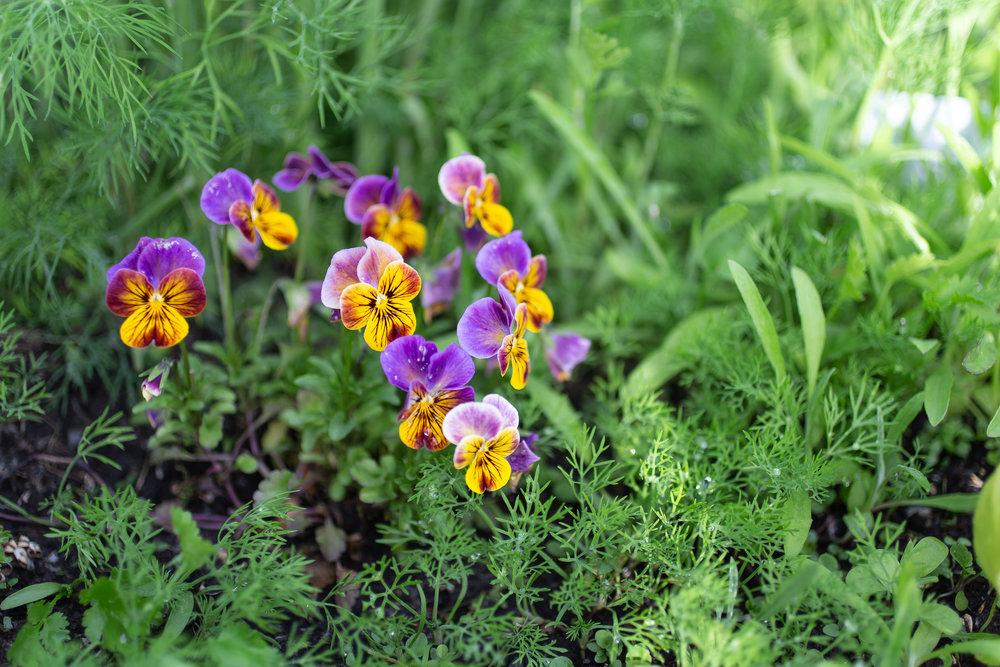 PlantsandFlowers-30.jpg