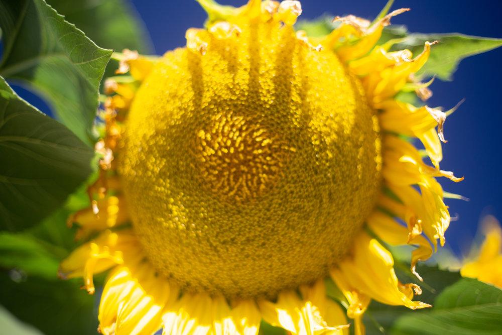 flowersandplants-4.jpg