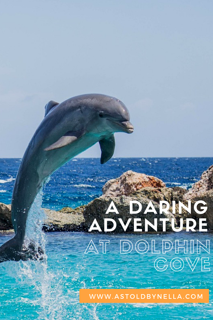 Daring Adventure at Dolphin Cove