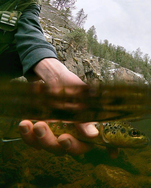 Perspective • • • #confidenceflies #flyfishing #keepemwet #secretspots #browntrout #fliesforsale