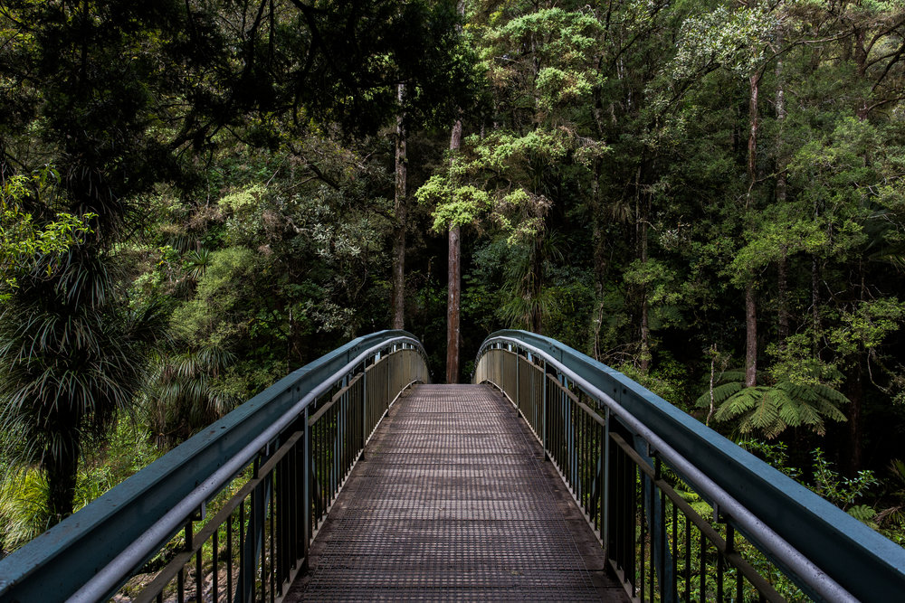 A bridge leading into a rain forest.