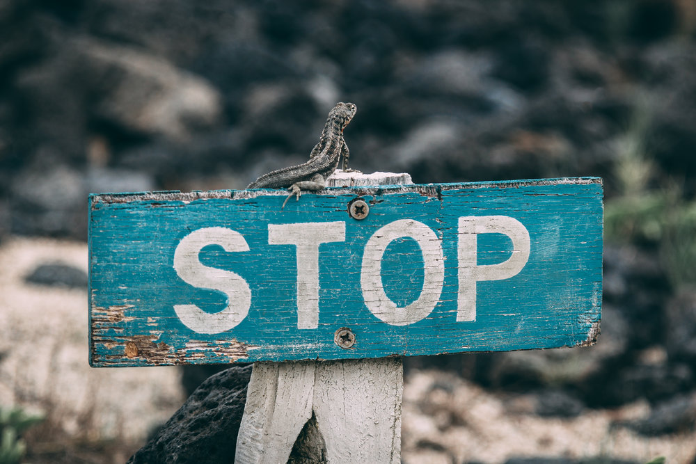 """A blue sign that says """"stop"""" with a lizard sitting on top of it."""