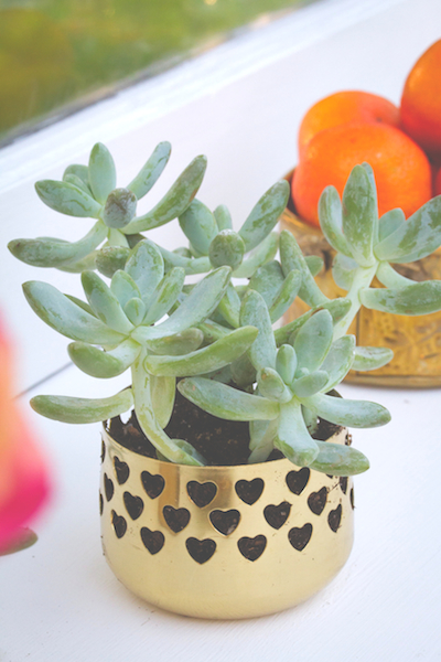 Retro Peacock succulent and vintage brass (1)