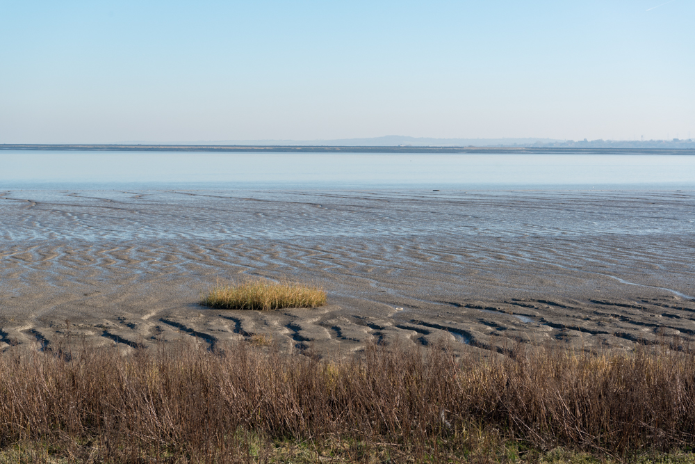 The mudflats of the Thames estuary looking towards Cliffe Pools RSPB from East Tilbury