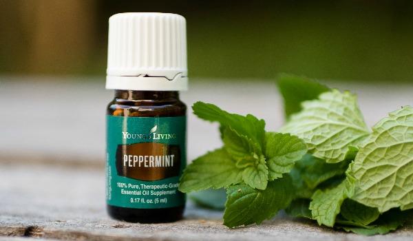 peppermint-1