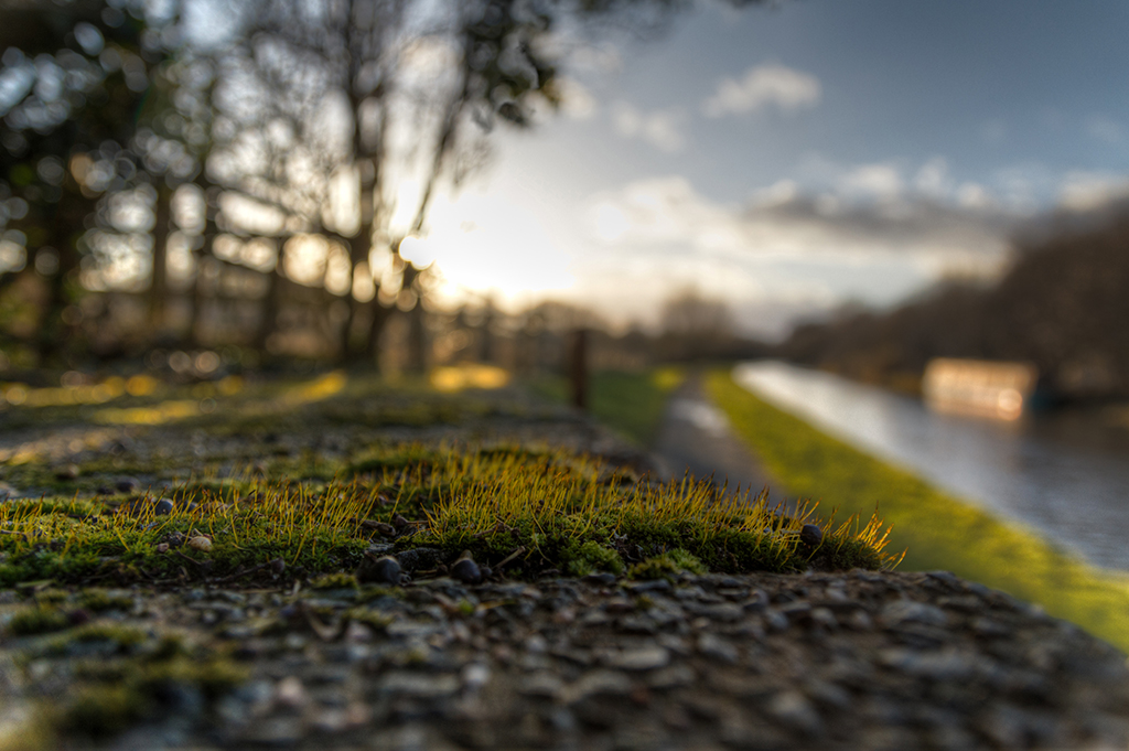 Canalside Walk (19/365)