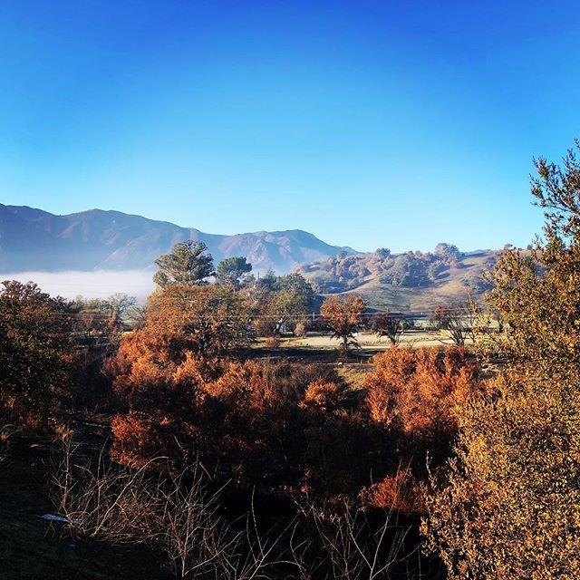 Agoura Hills in the morning! #regrowth #morningfog #santamonicamountains #woolseyfire