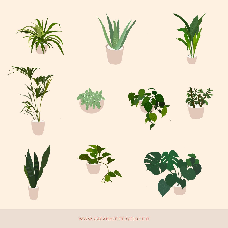 Piante Eleganti Da Appartamento le 10 piante da appartamento per vendere casa al meglio: l