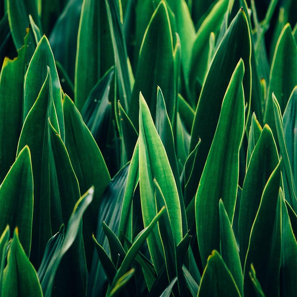 Plant-Based Wax