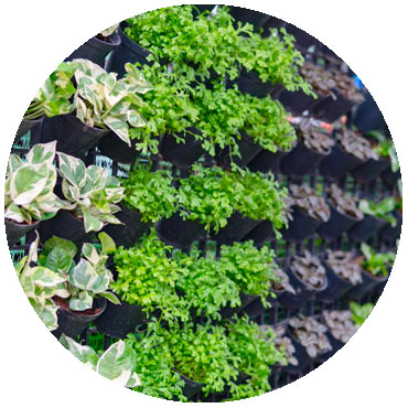 vertical farming to grow food