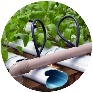 automated hydroponic grow system