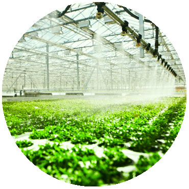automatic irrigation system watering greenhouse plants