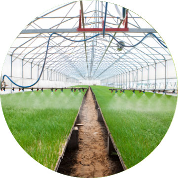 irrigation system distributing water evenly over crops