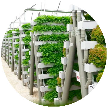 hydroponics to grow plants