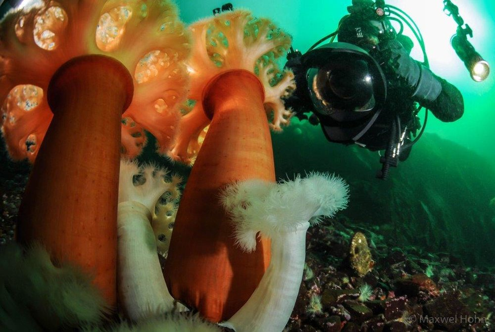 Underwater Photographer -