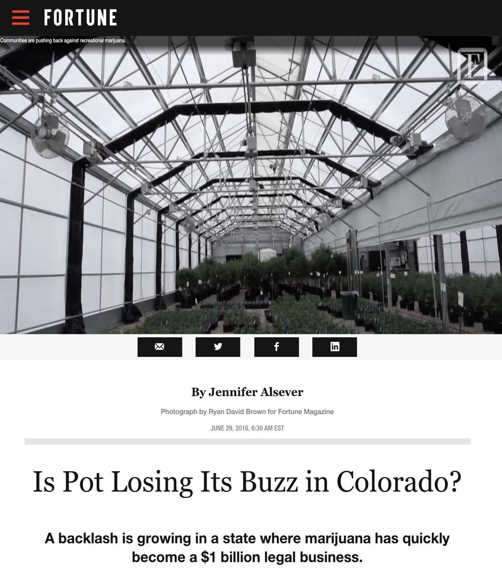 Es el bote que pierde su zumbido en Colorado - Una reacción violenta está creciendo en un estado donde la marihuana se ha convertido rápidamente en un negocio legal de $ 1,000 millones.