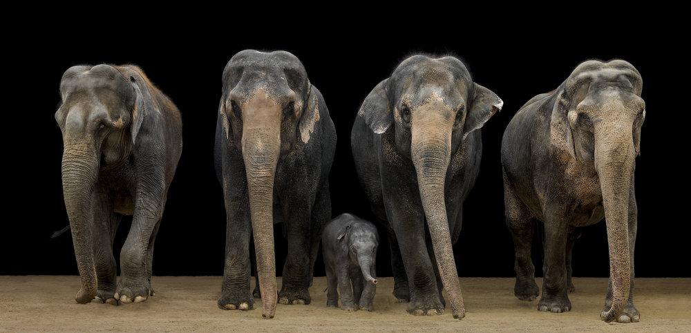 Foto Kampagne Elefanten Kinderzoo Knie