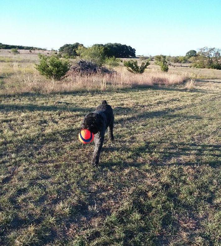 Ryker walking with ball.jpg