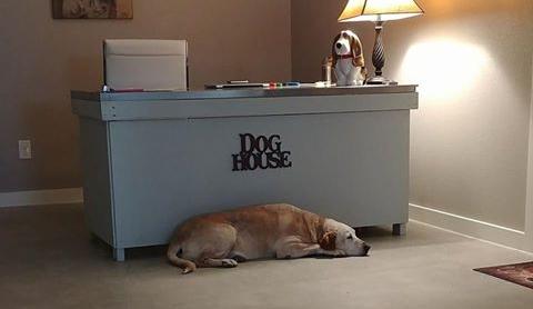 Millie in front of desk.jpg