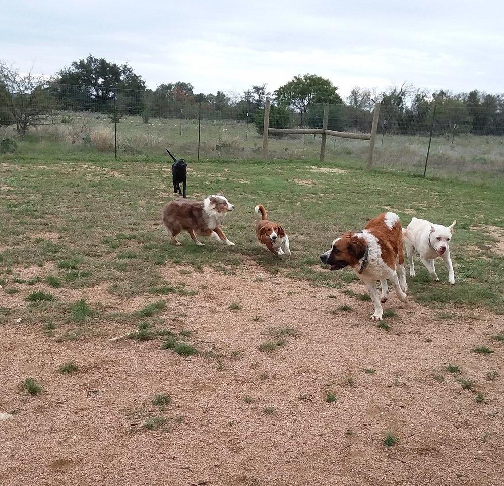 Tamara's dogs & Wally.jpg