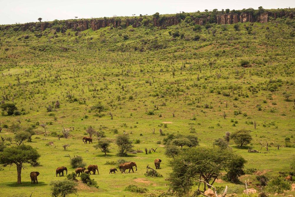 Elephant Habitat.jpg