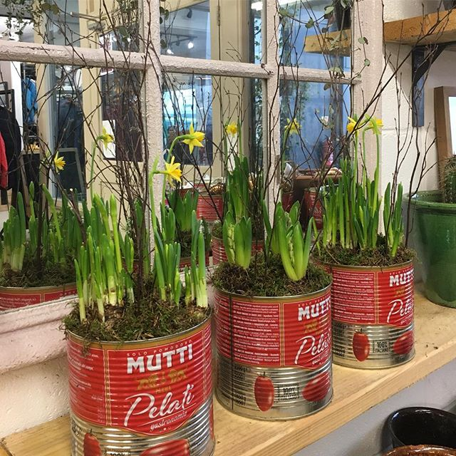 Planted tins making a great gift for Christmas 🎄  #plants #christmas #originalgiftideas #bulbs #giftgiving