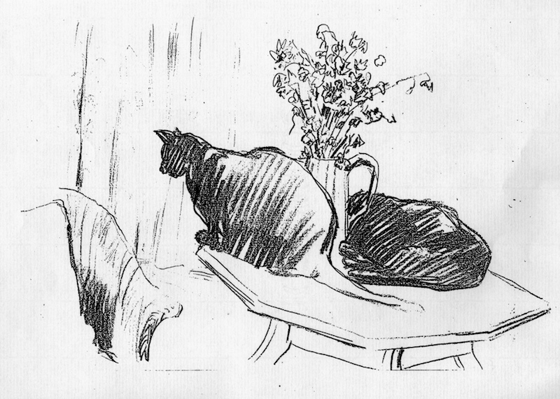 Cats  and Flowers (pencil drawing)  ©irenejuliawise