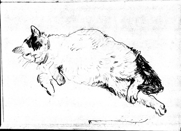 Chloe the Cat (drawing) ©irenejuliawise
