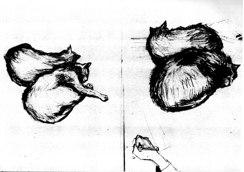 Drawing Cats ©irenejuliawise