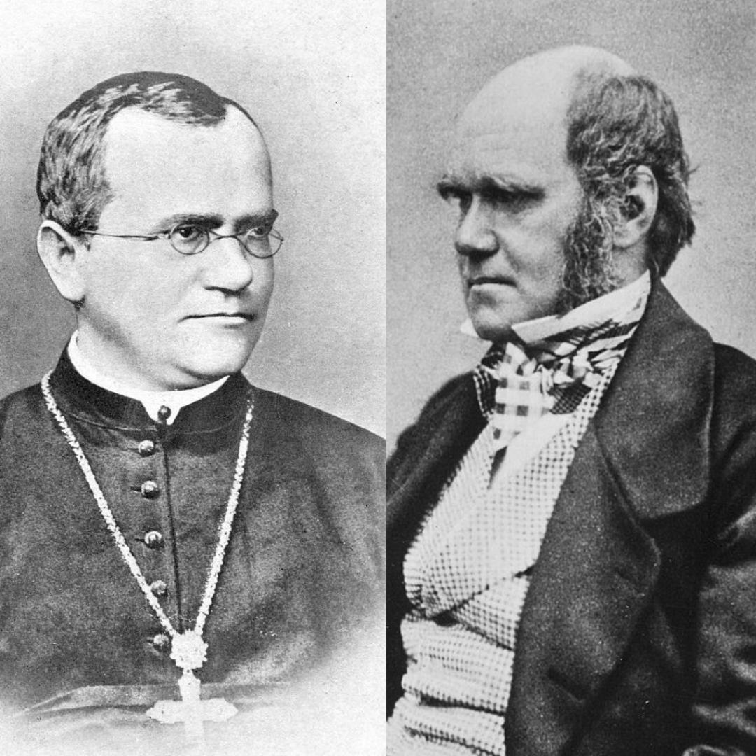 011 - Darwin vs Mendel