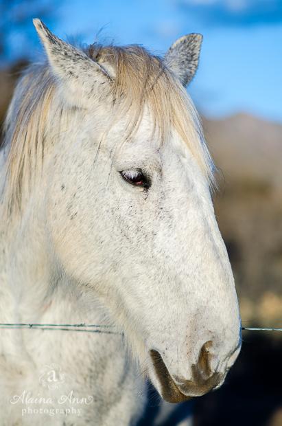 White Horse | Photograph Story | Alaina Ann Photography