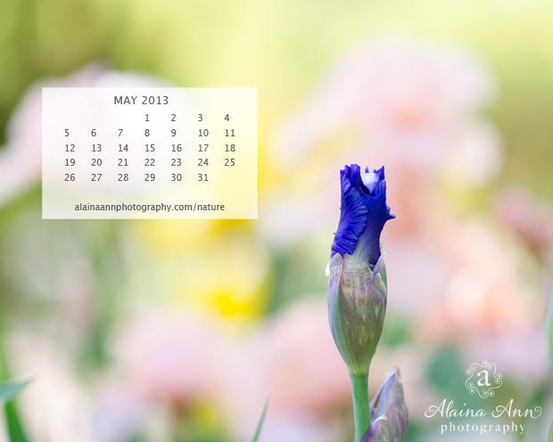 AAP May 2013 Wallpaper Calendar
