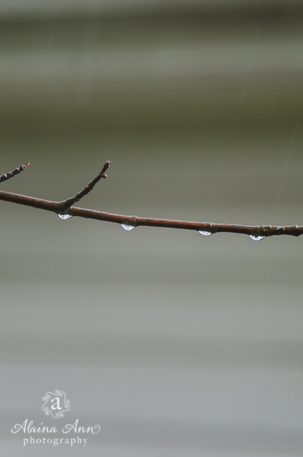 Branch Raindrops