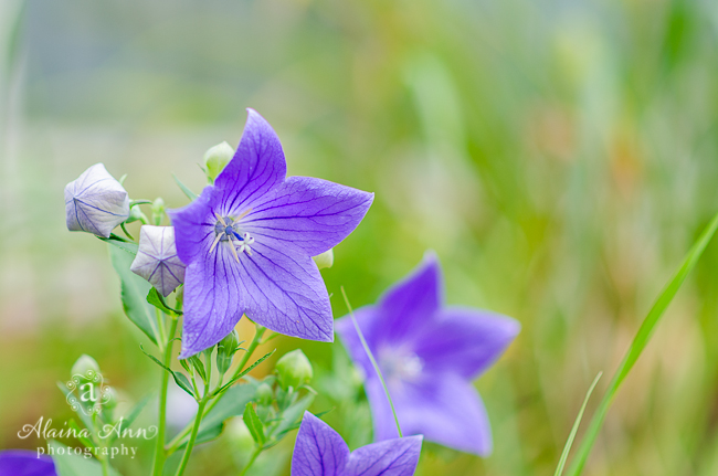 Blue Bliss