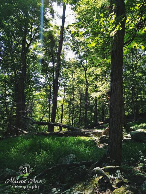 Catoctin Mountain Trees