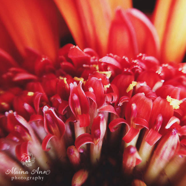 Inside a Flower | Alaina Ann Photography