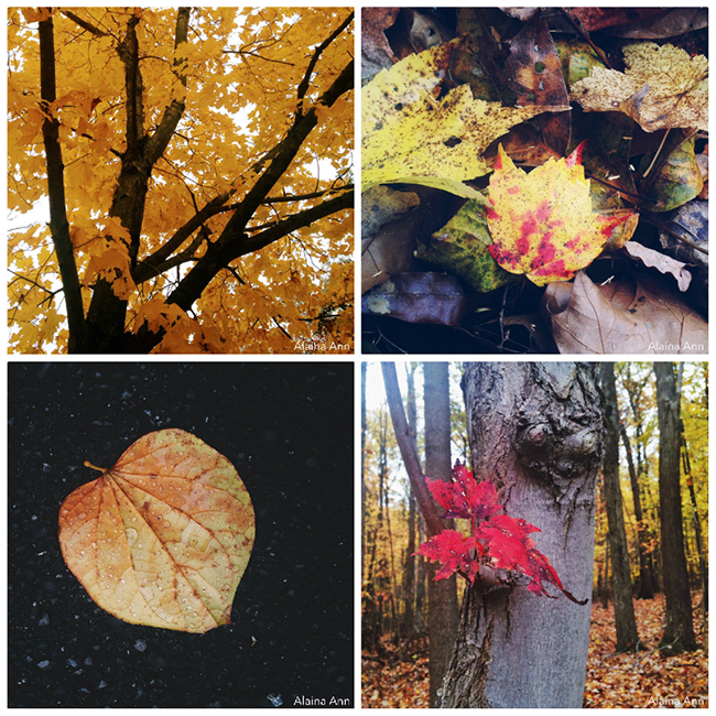Maryland State Park iPhone Favorites | Alaina Ann Photography