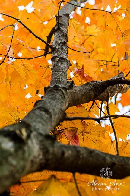 Orange Sugar Maple Vertical | Alaina Ann Photography