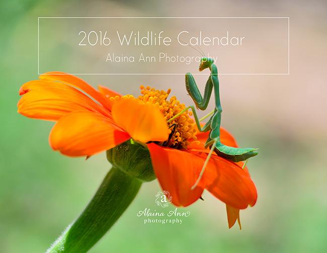Inside the 2016 Wildlife Calendar | Alaina Ann Photography